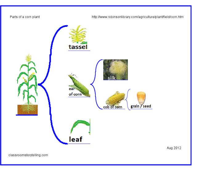E Corn Plant Brace Map